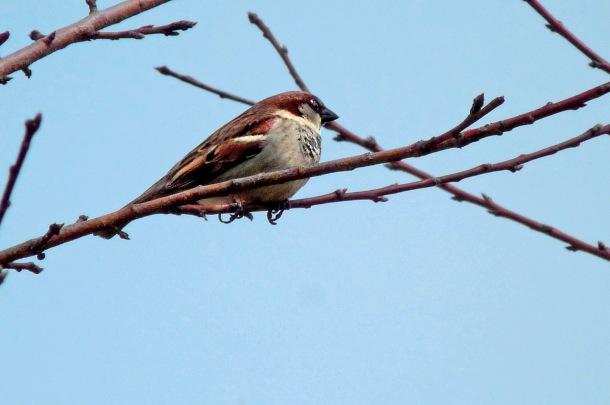 Allentown_Bird_3