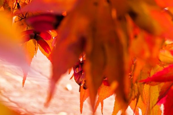 Macro_Warm Leaves_A