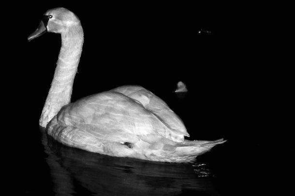 Swan_Yuki Park