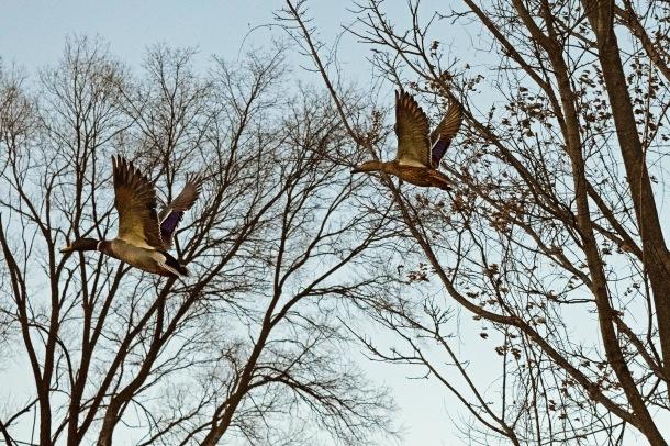 UT Birds