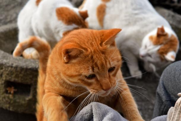 Cats_Kyoto