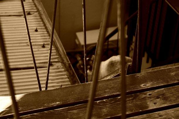 Cat Sneak-001_Jpeg