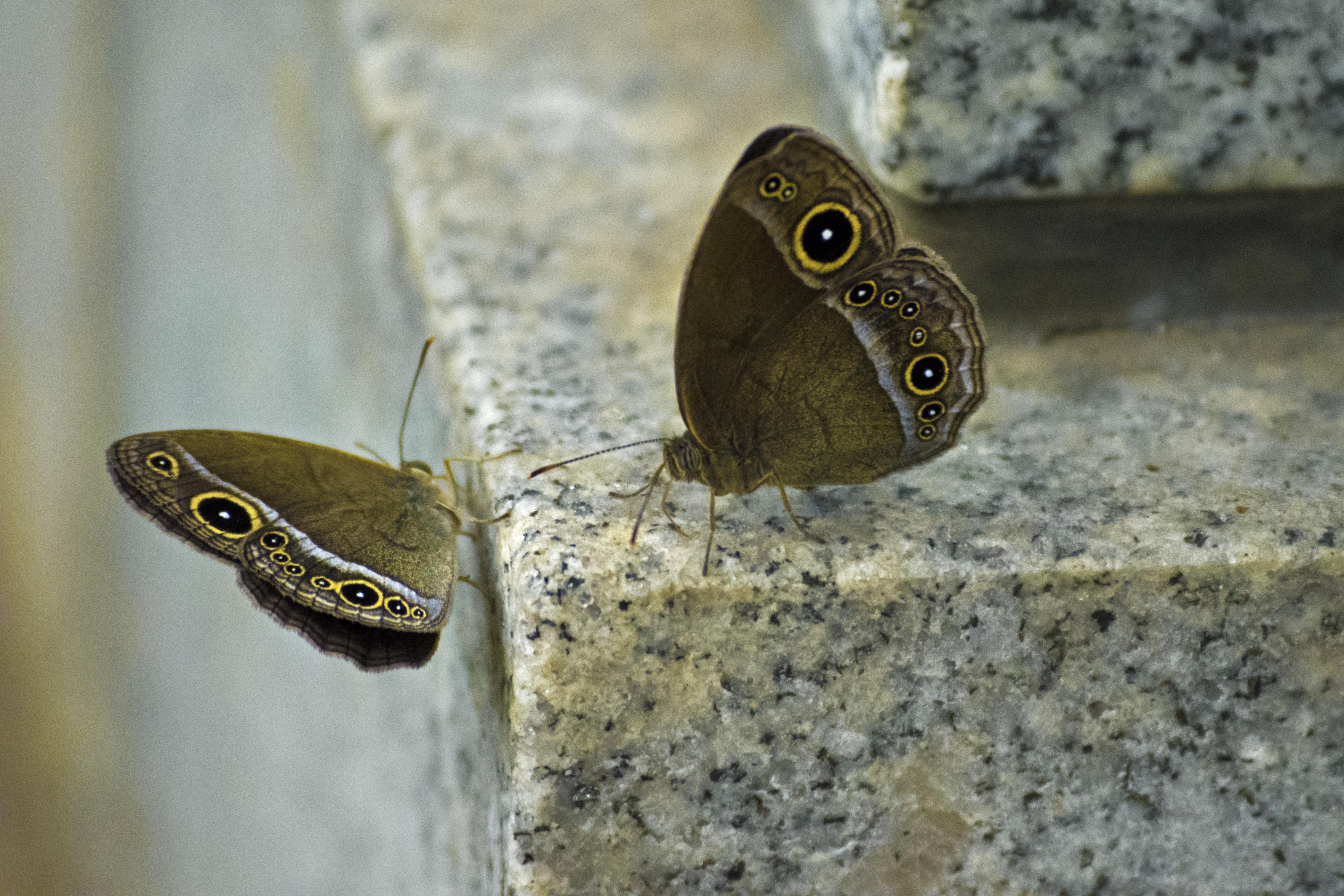 2016_July_20_Outer Kofu-004_moth