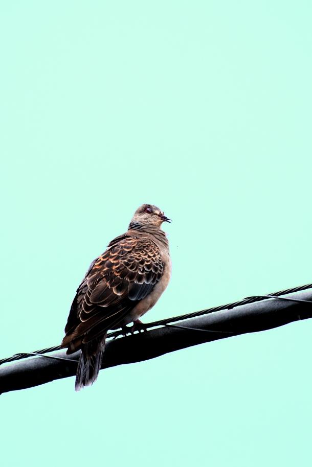 typhoon-bird