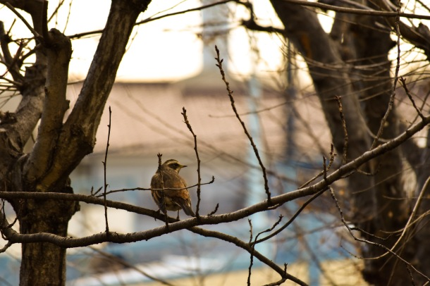 Bird_Feb_5_2018