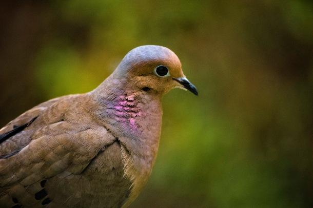 bird_jpeg
