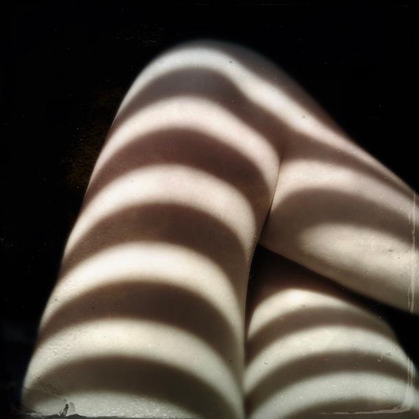 Sunday Zebra