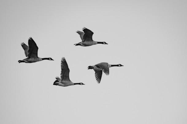 PP_002_black and white